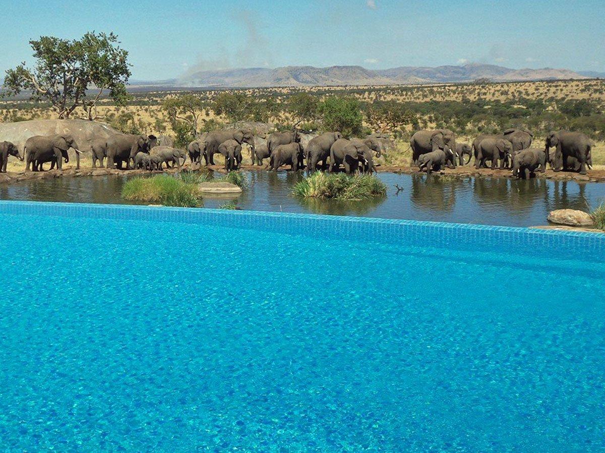 Las Cuatro Sesiones del safari Lodge Serengeti. Tanzania