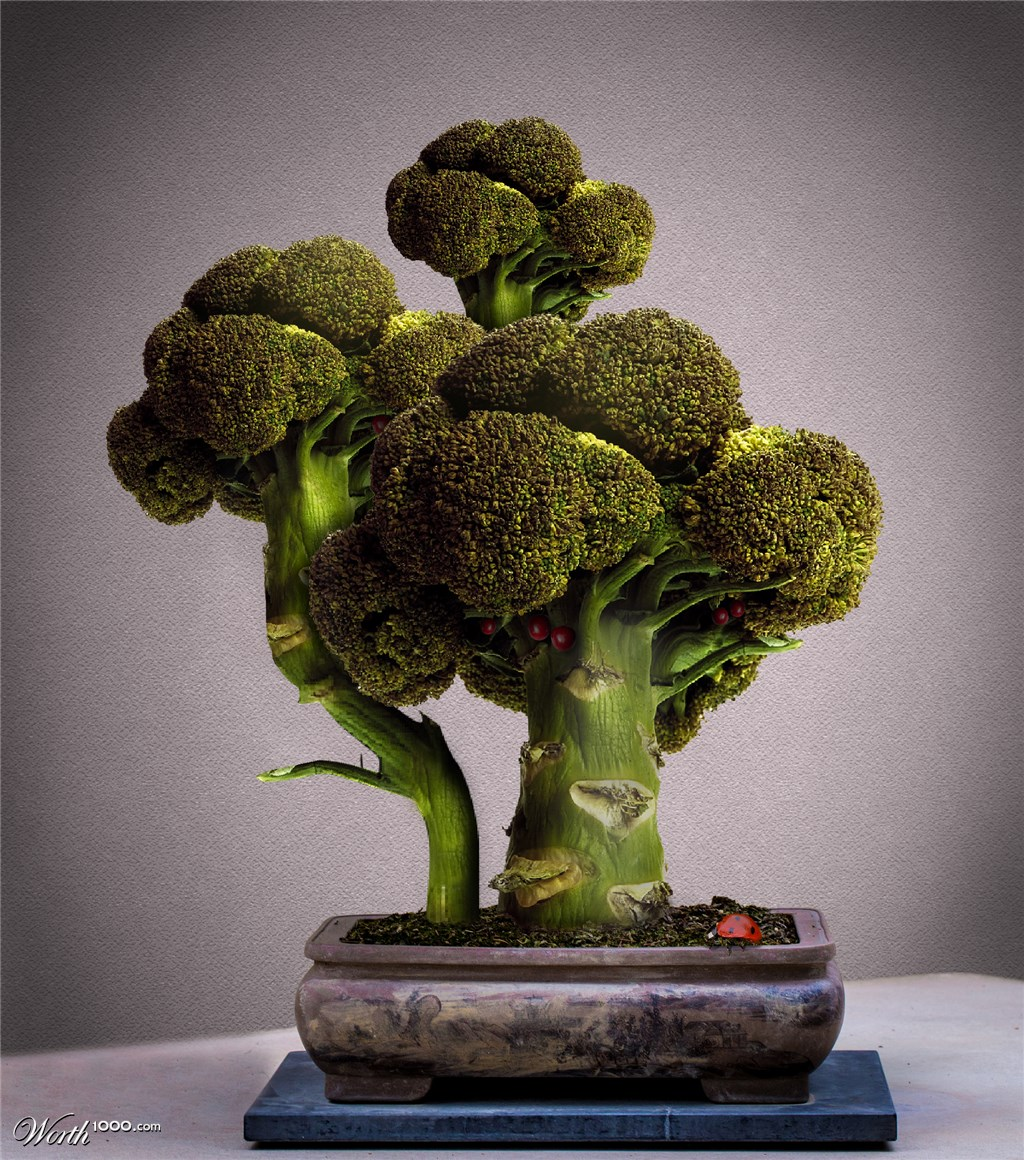2014-05-17-broccoli-bonsai