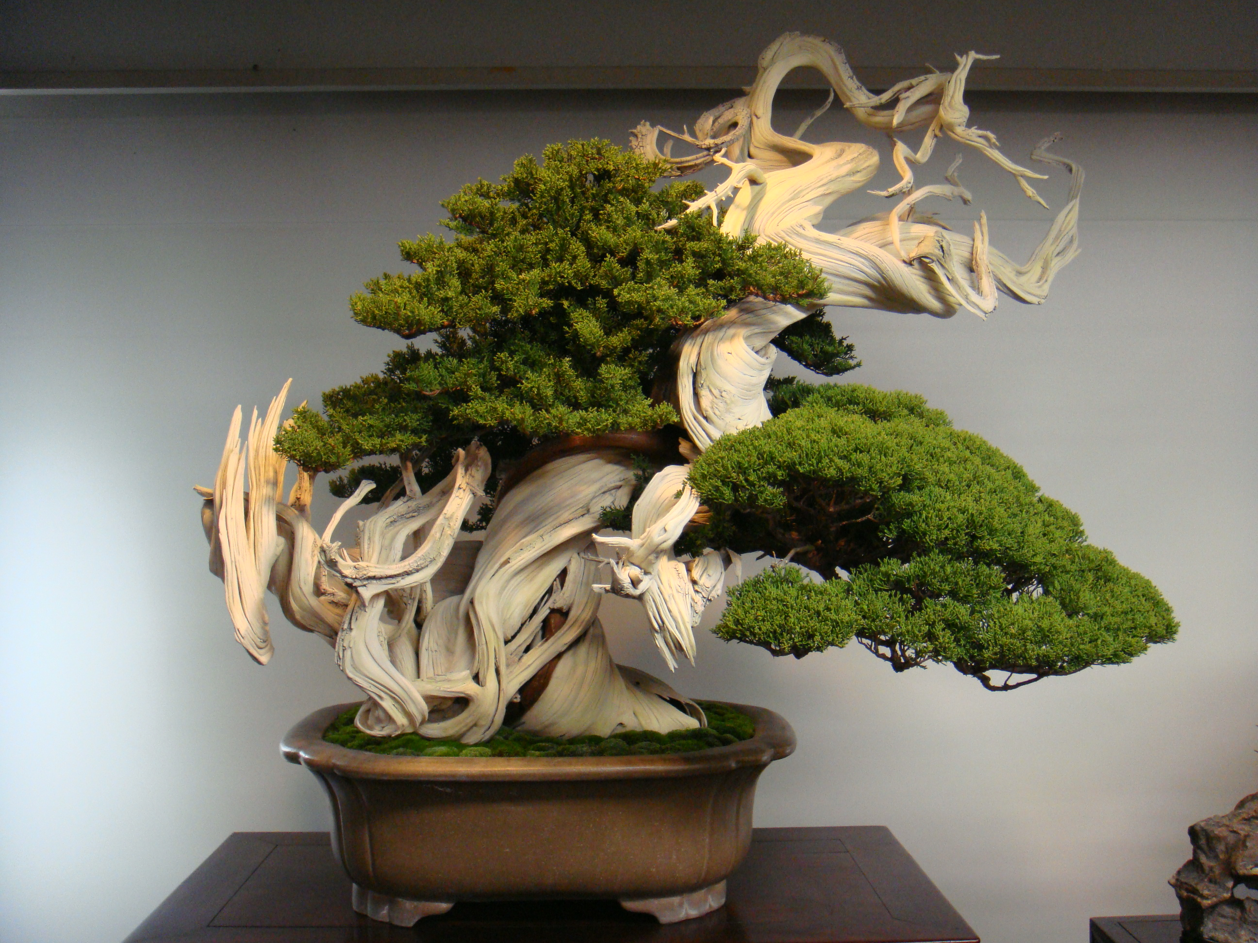 The-Most-Beautiful-And-Unique-Bonsai-Trees-In-The-World-homesthetics-27
